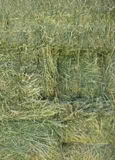alfalfa-premium_grande